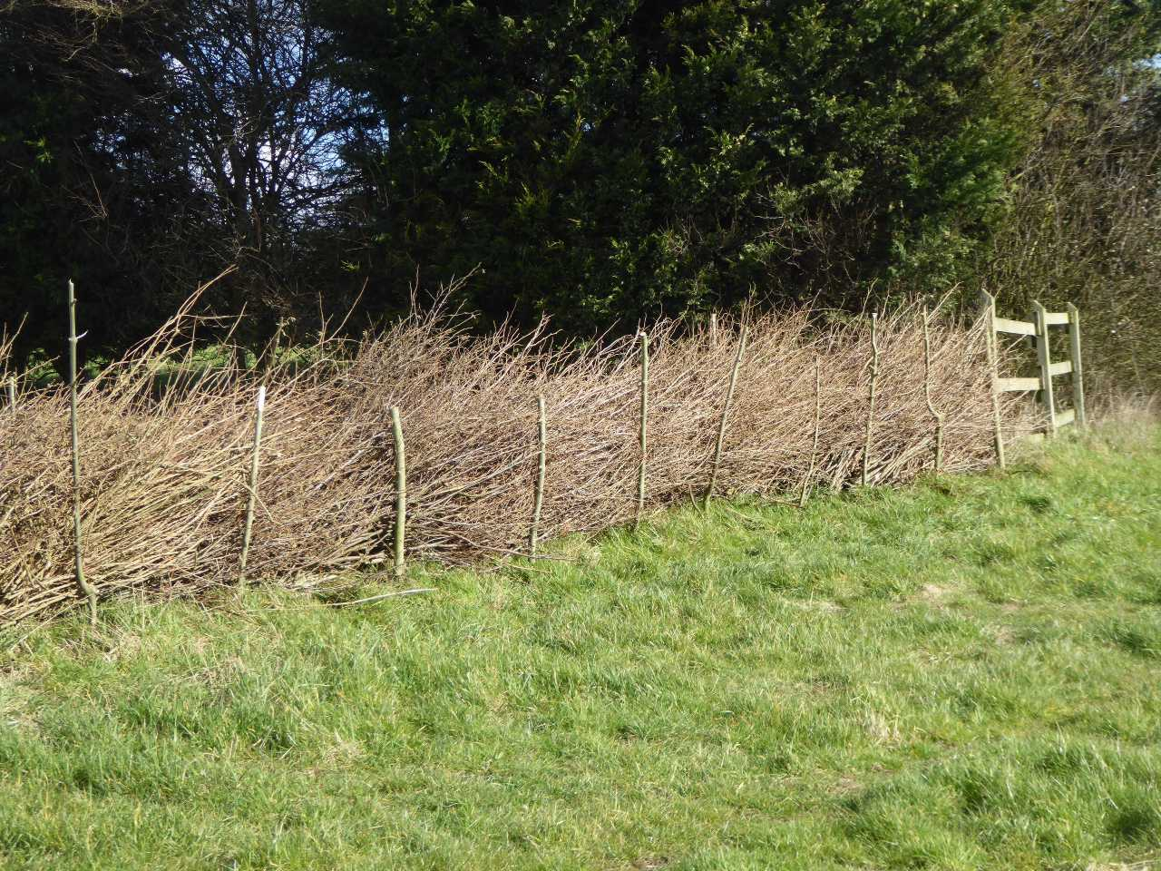 Dead hedging – a philosophical journey
