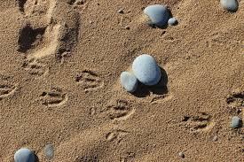 Whose footprints are these? May bank holiday challenge
